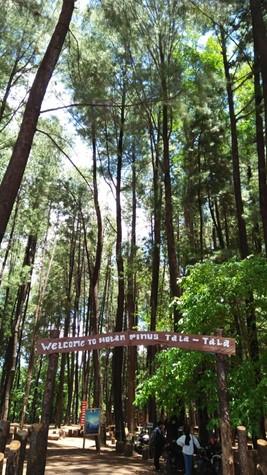 Hutan Pinus Tala-Tala